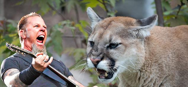Canción de Metallica salva a una excursionista del ataque de un puma