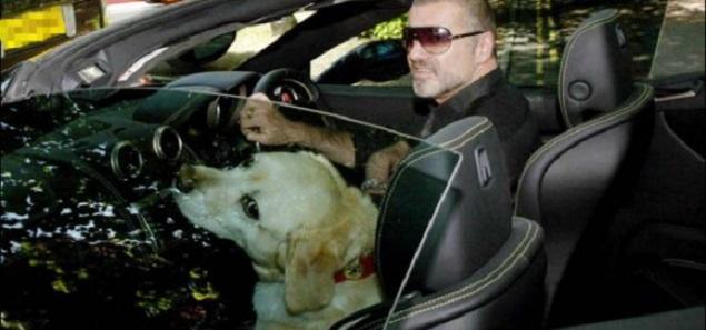 La triste historia de Abby, el perro que perteneció a George Michael
