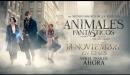 Animales Fantásticos y Dónde Encontrarlos - Tráiler Final Español HD