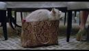 Siete vidas: Este gato es un peligro - Trailer final español (HD)